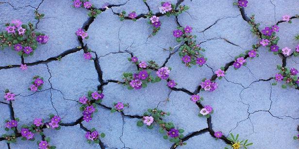Psicogenealogia-Sviluppare-Resilienza