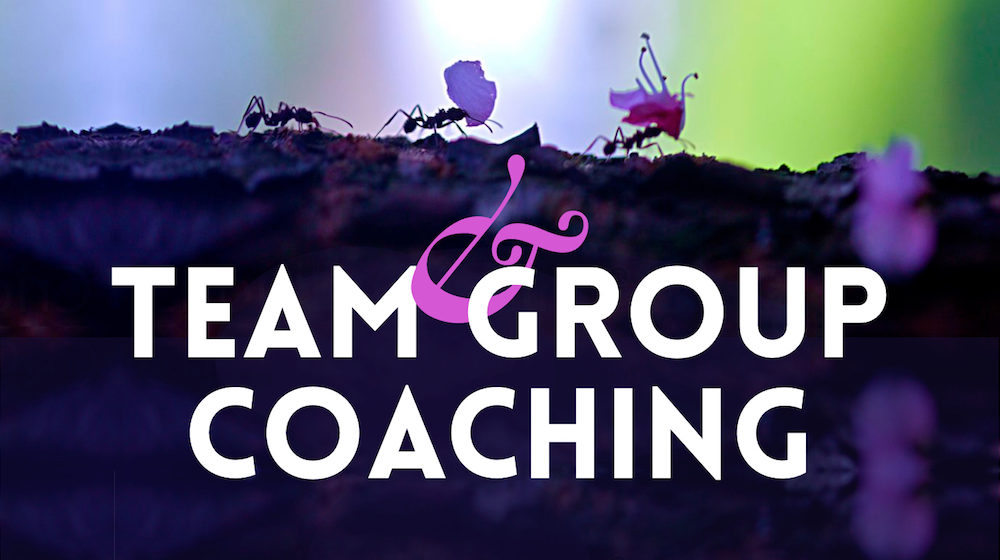 Team & Group Coaching